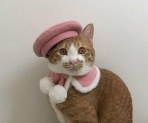 cat, animal, and fashion image
