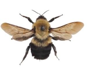 bee, aesthetic, and mood image