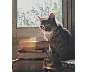 book, books, and Gata image