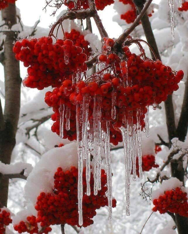 snow, ice, and red image