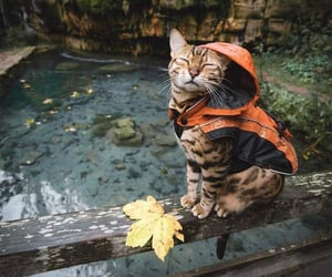 cat, cute, and nature image