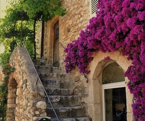 flowers, france, and travel image