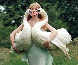 Swan and model image