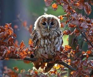 autumn, owl, and fall image