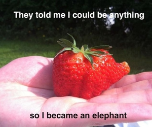 elephant, strawberry, and cute image