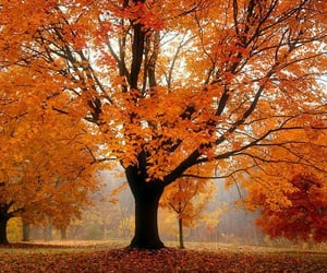 autumn, fallen leaves, and tree image