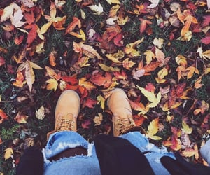 autumn, chilly, and fall image