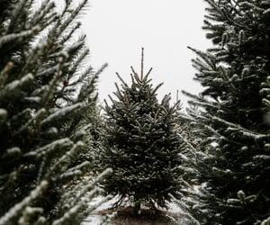 snow, christmas, and nature image