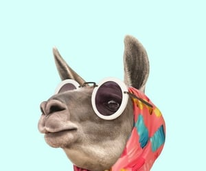 background, wallpaper, and llama image