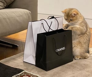 cat, luxury, and chanel image