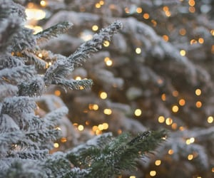 aesthetic, christmas tree, and winter image