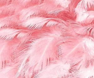 feather, pink, and wallpaper image