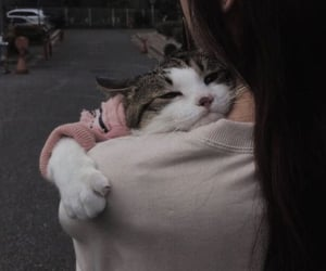 cat, feelings, and liebe image