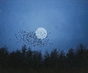 autumn, birds, and black image