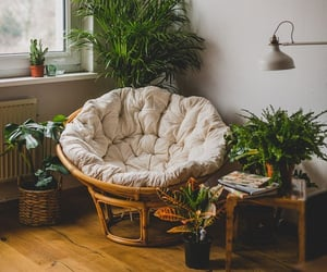 plants, design, and home image