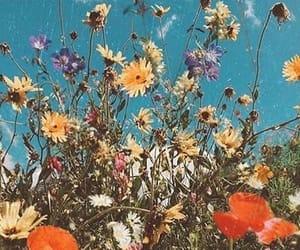 aesthetic, garden, and idyllic image
