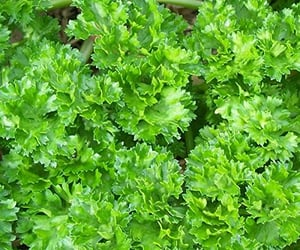 health, healthy, and herbs image