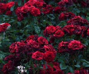 bonita, dark red, and girl image