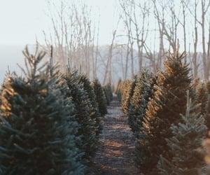 tree, christmas, and nature image