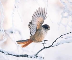 beautiful, photography, and bird image