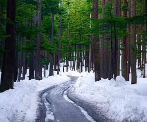 cold, nature, and snow image