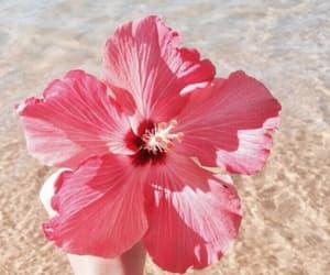 beach, flora, and hibiscus image
