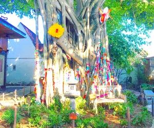 florida, wish tree, and Miami image