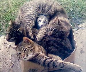 dem teefs, dem cats, and dem claws image