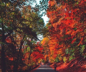 autumn, fall, and landscape image