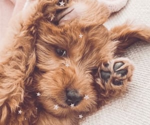 glitter, puppy, and cute image