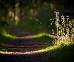 grass and road image