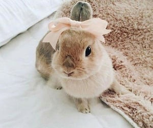 animaux, lapin, and rose image