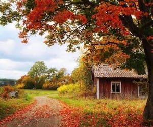 autumn, autumnal, and fall image