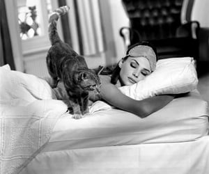 cat, audrey hepburn, and black and white image