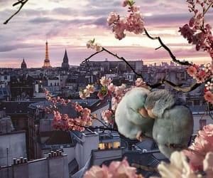 paris, bird, and travel image