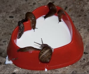 aesthetic, snail, and milk image
