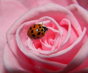 animals, black and red, and flower image