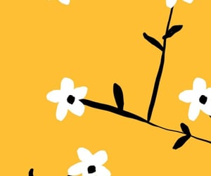 flowers, wallpapers, and yellow image