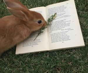 book, rabbit, and grass image