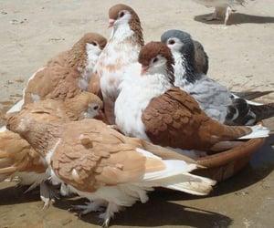 bird, beige, and brown image