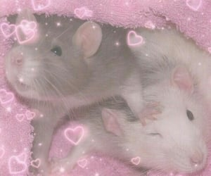 heart, mouse, and rat image