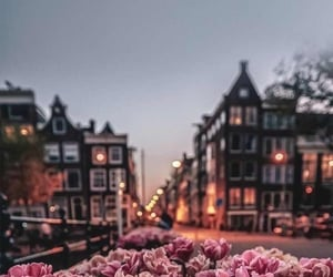 flowers, background, and city image