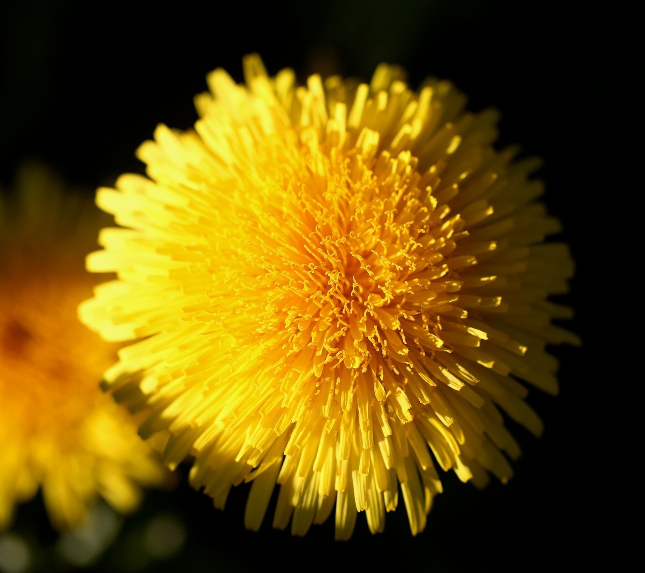 article, dandelion, and beauty image