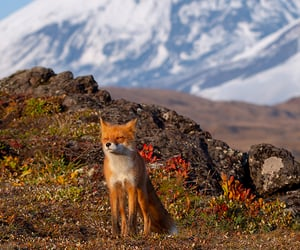 autumn, fox, and nature image