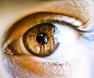 50mm, brown, and closeup image