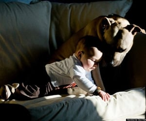 baby, pitbull, and friends image
