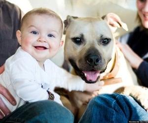 family and pitbull image