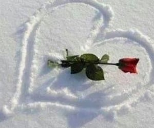 heart, red rose, and snow image