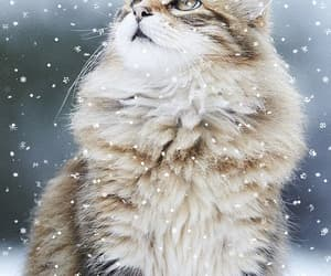 animals, gif, and snow image