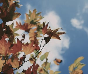 aesthetic, autumn, and blue image